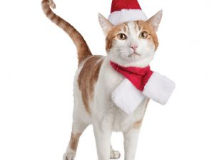 cat-christmas-hat-costume