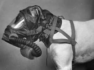 Dog Gas Masks 13